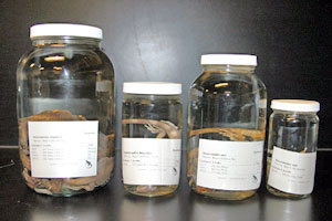 Jar Renovation showing standard sizes